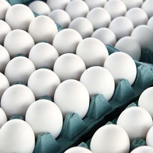 Image sur 15dz œuf Gros